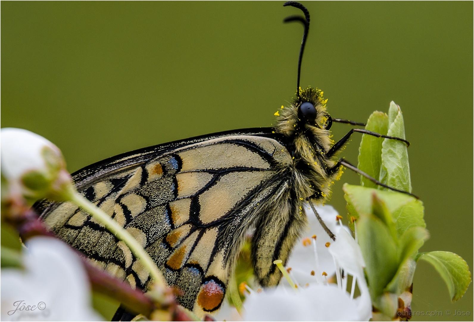 Macro/...butterfly