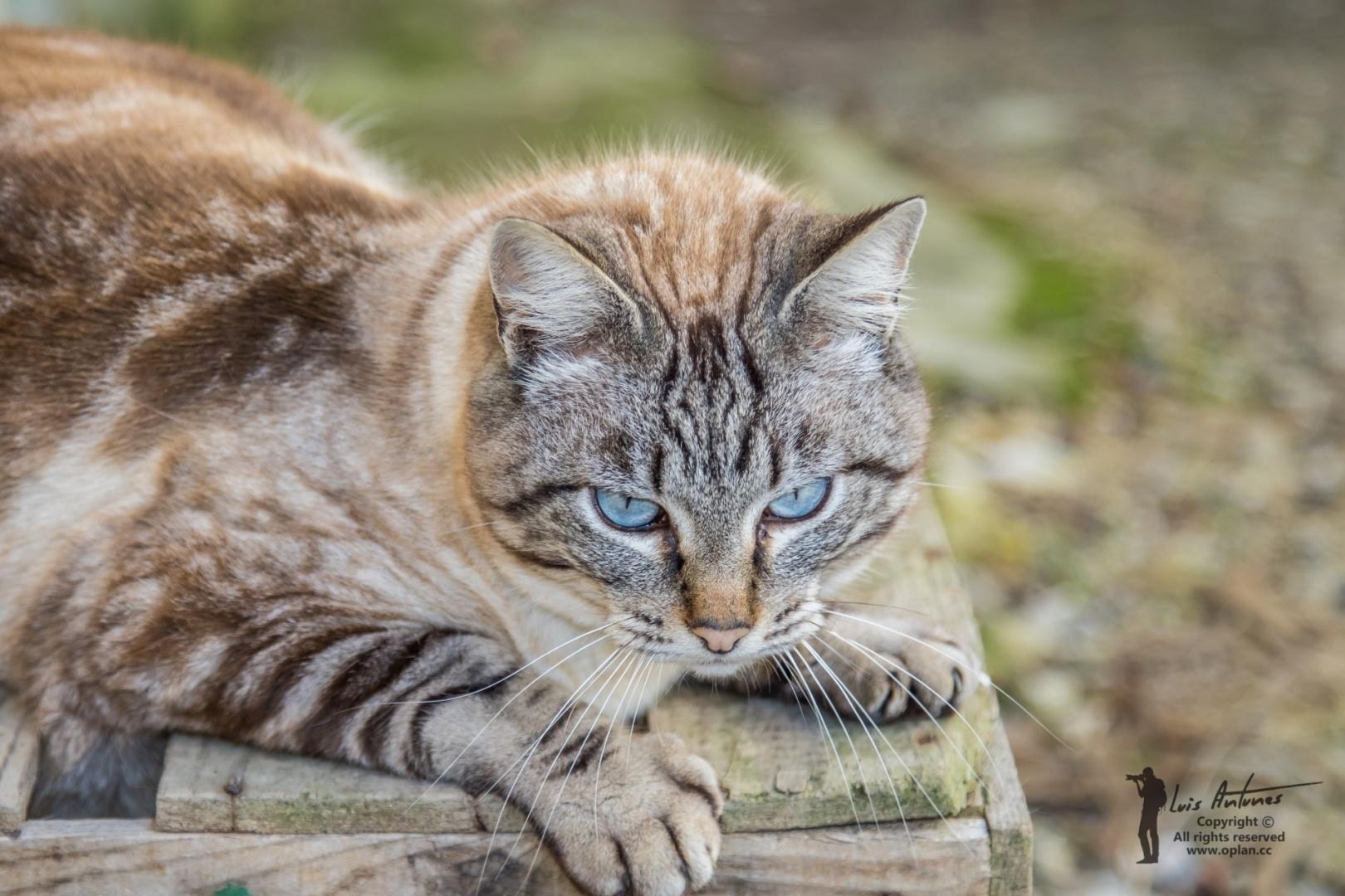 Animais/Riscas - The street cat