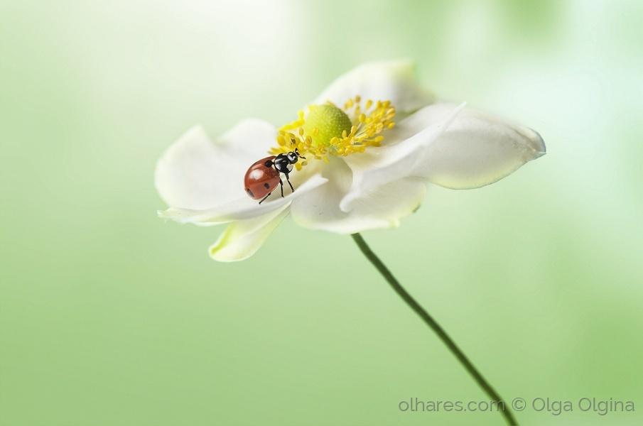 Macro/ladybug