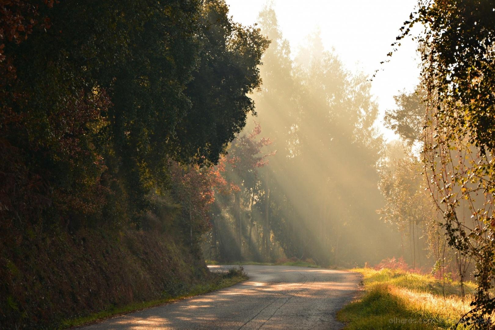 Paisagem Natural/Bruma de luz