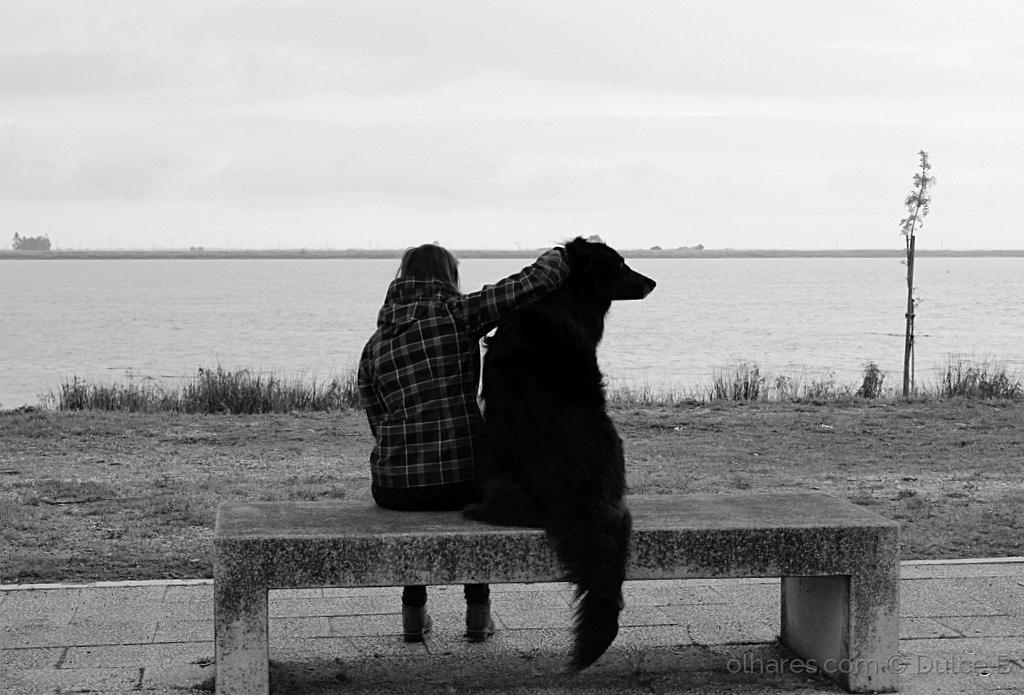 Animais/companheiros