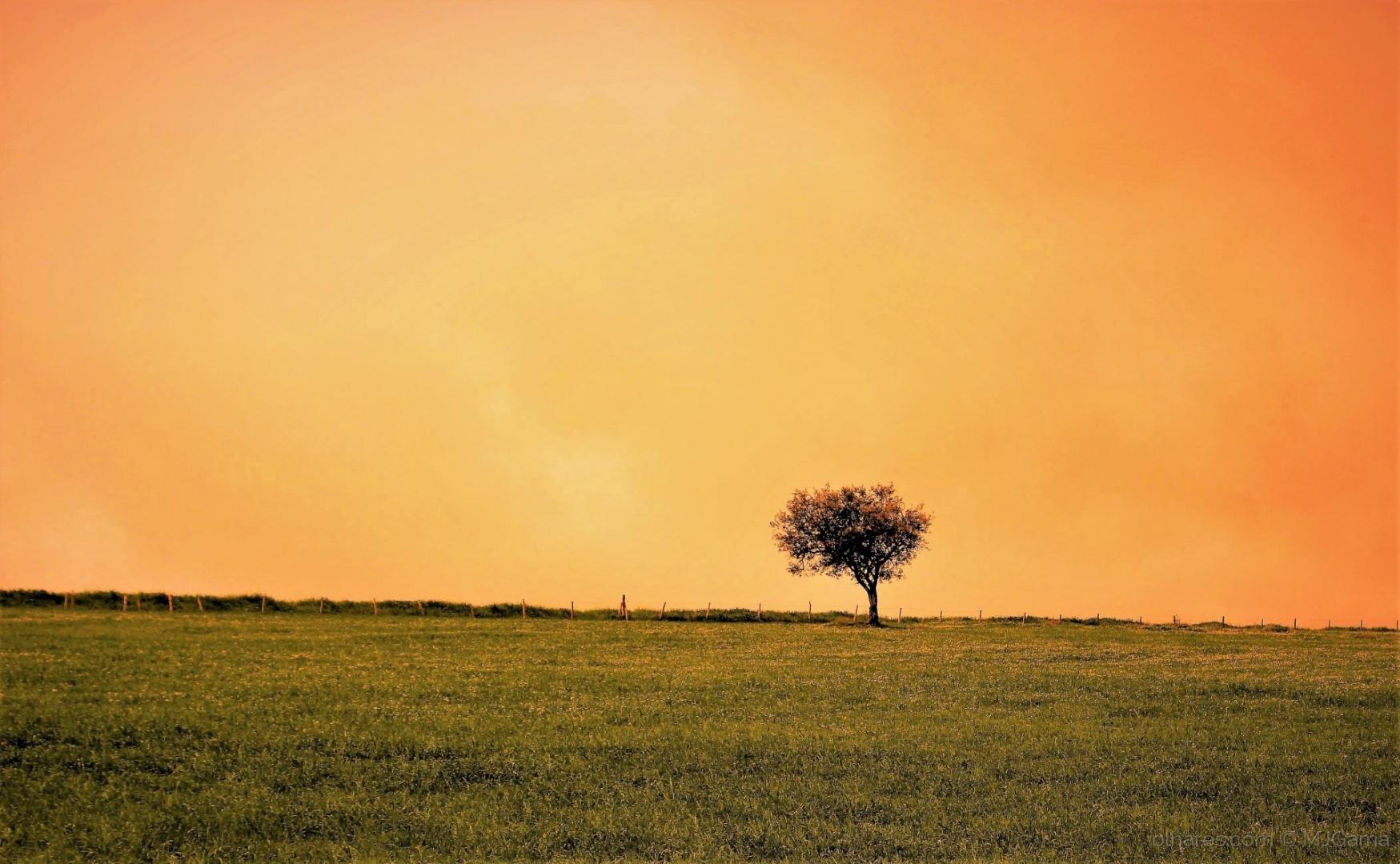 Paisagem Natural/na planície alentejana