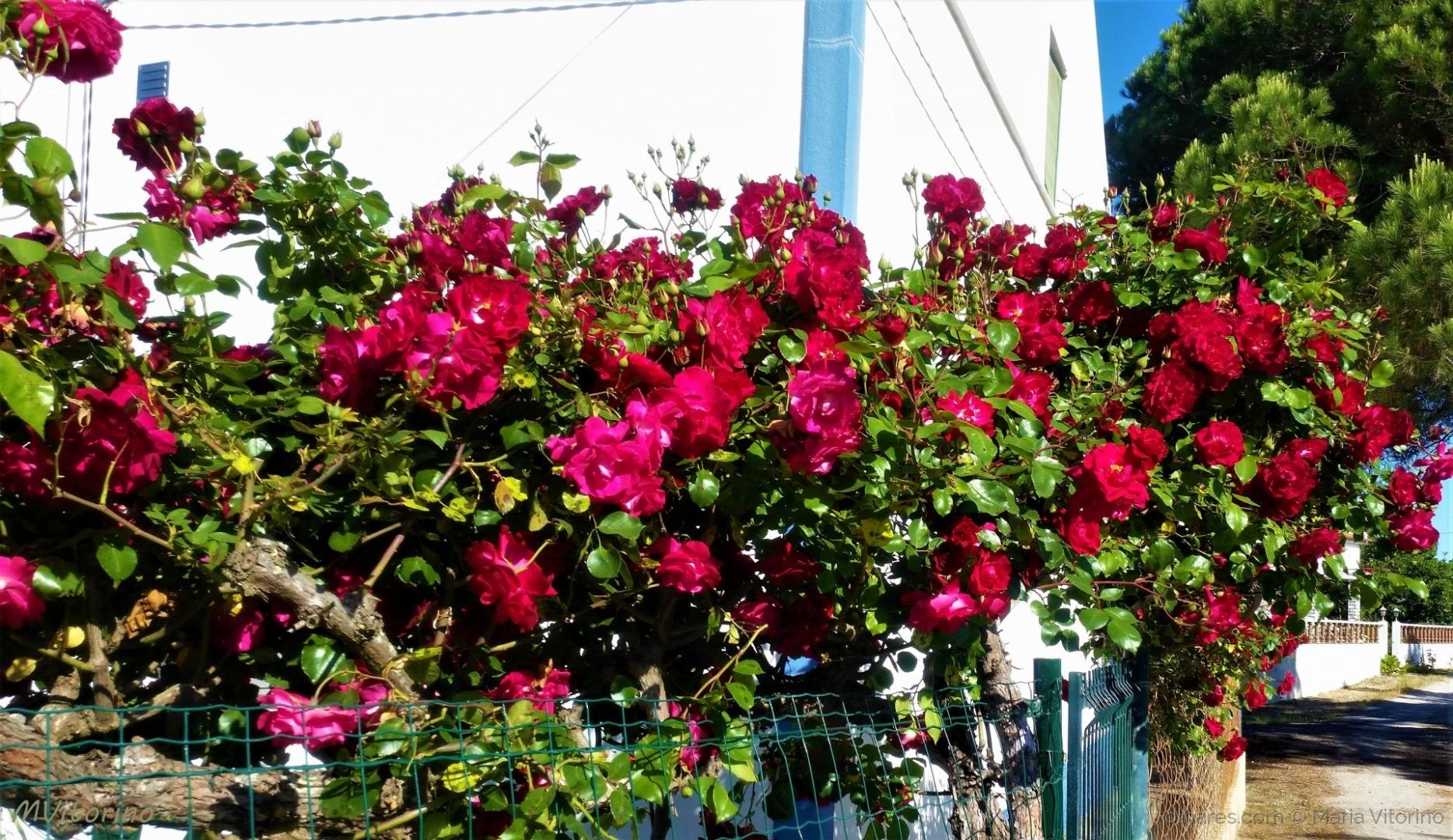 Paisagem Natural/Amor e saudade (ler sff) Dia do Pai