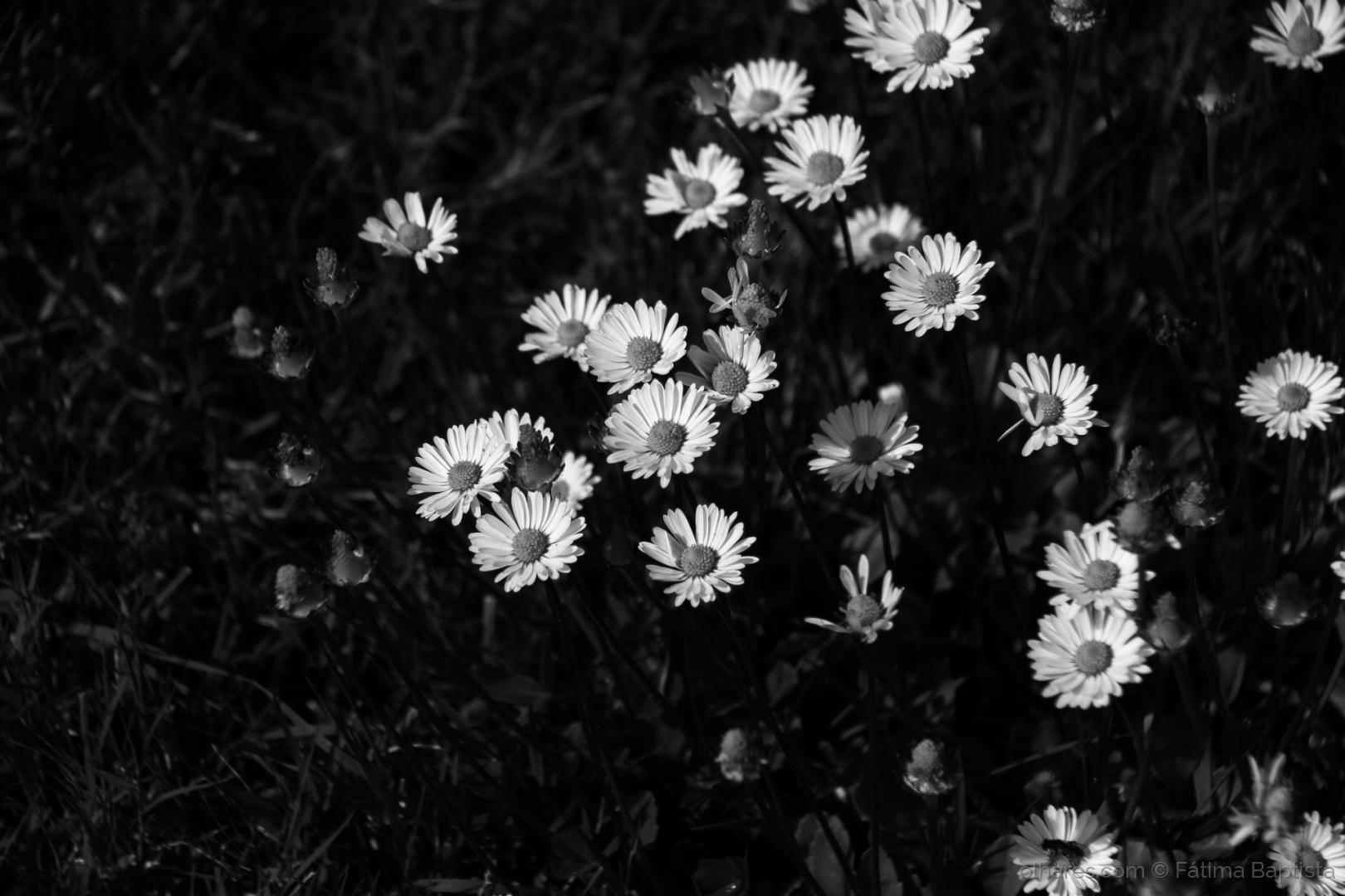 Outros/Primavera