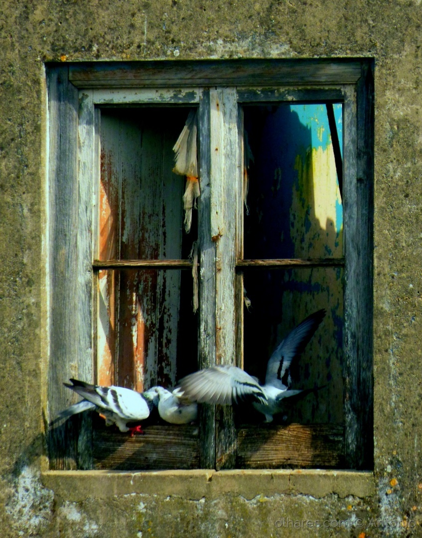 Fotojornalismo/Momento de pombos (ler)