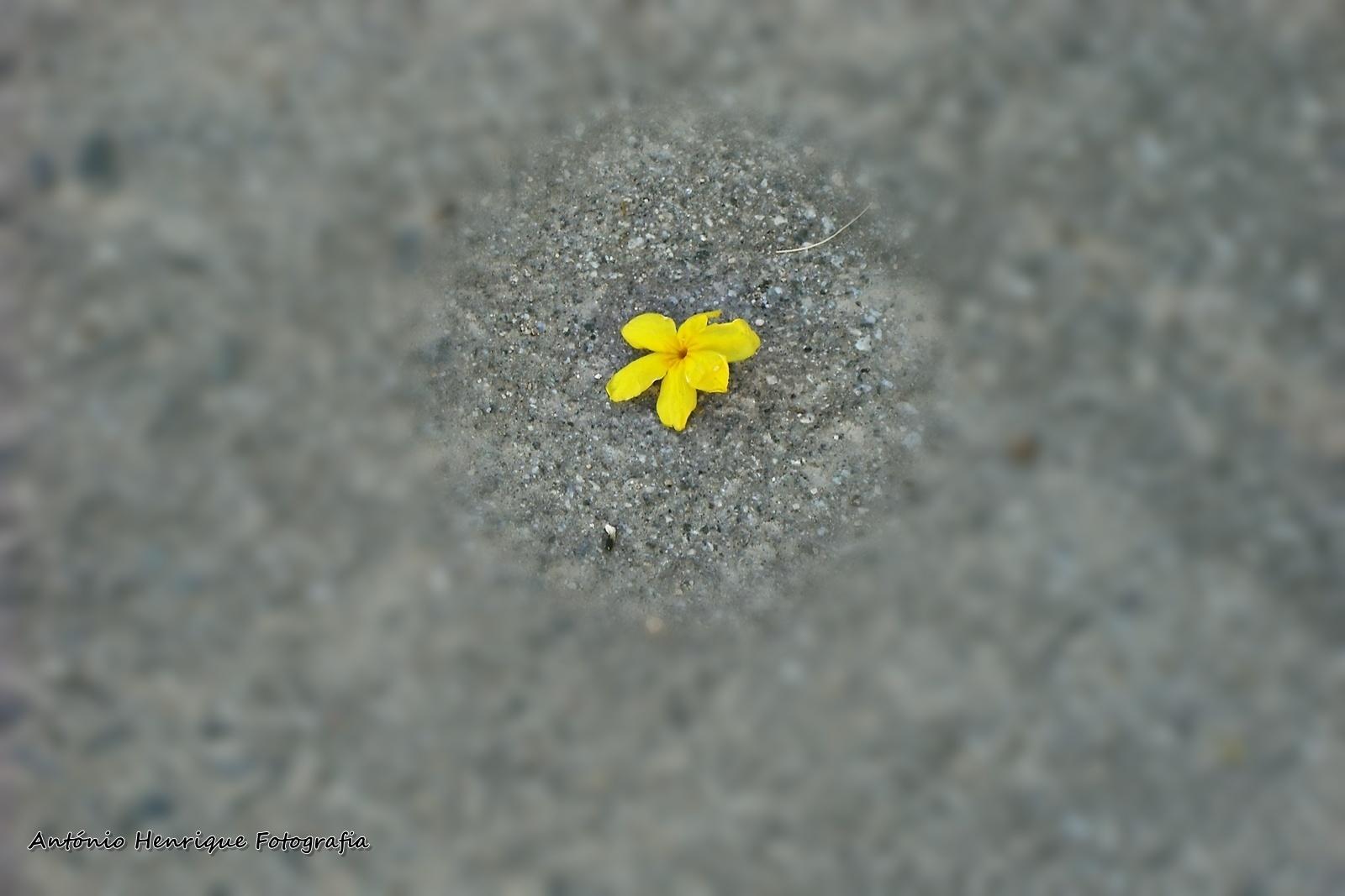 Abstrato/Quando uma flor cai (ler)