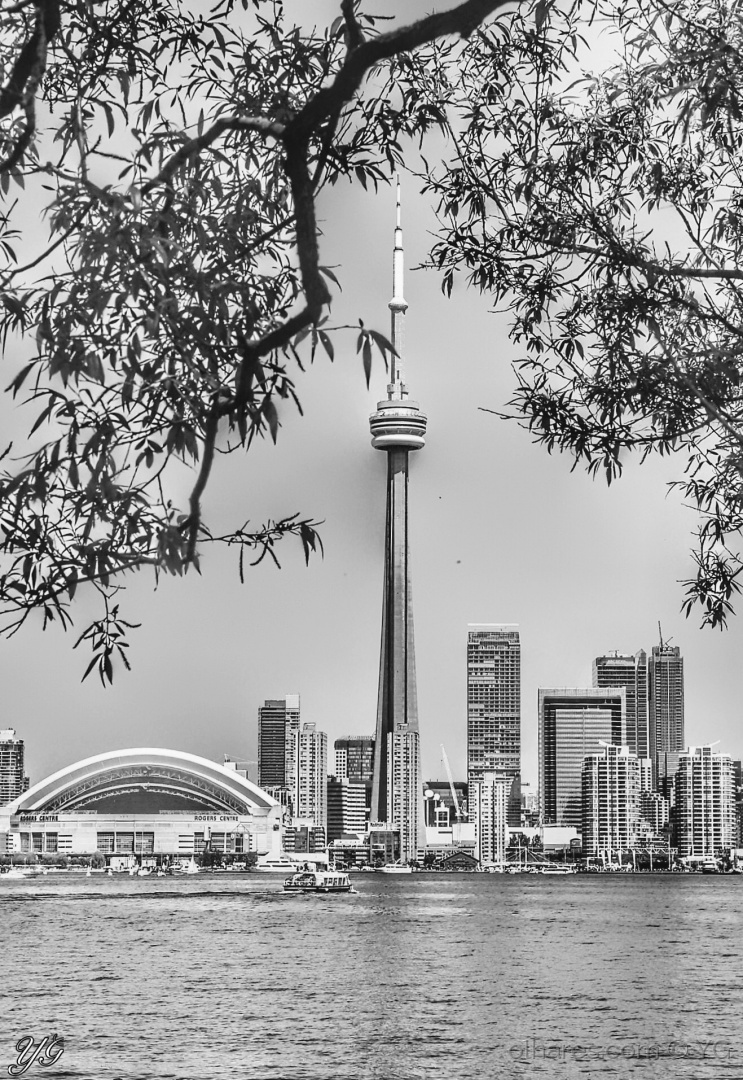 Paisagem Urbana/Toronto entre folhas