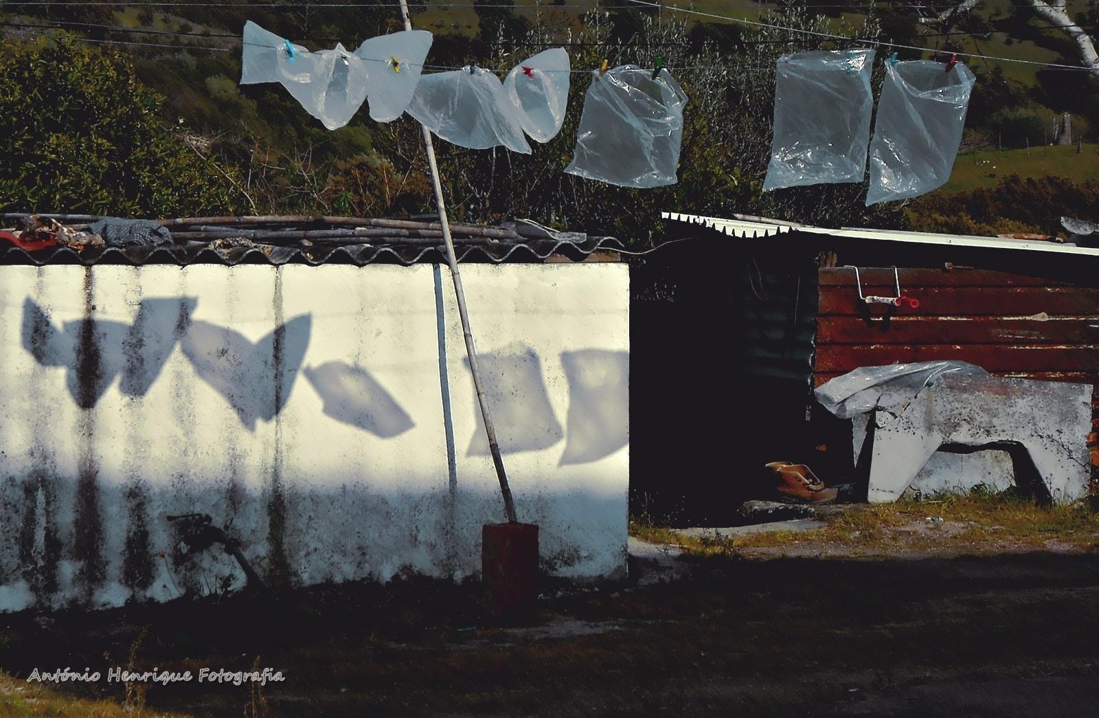Abstrato/A leveza das sombras