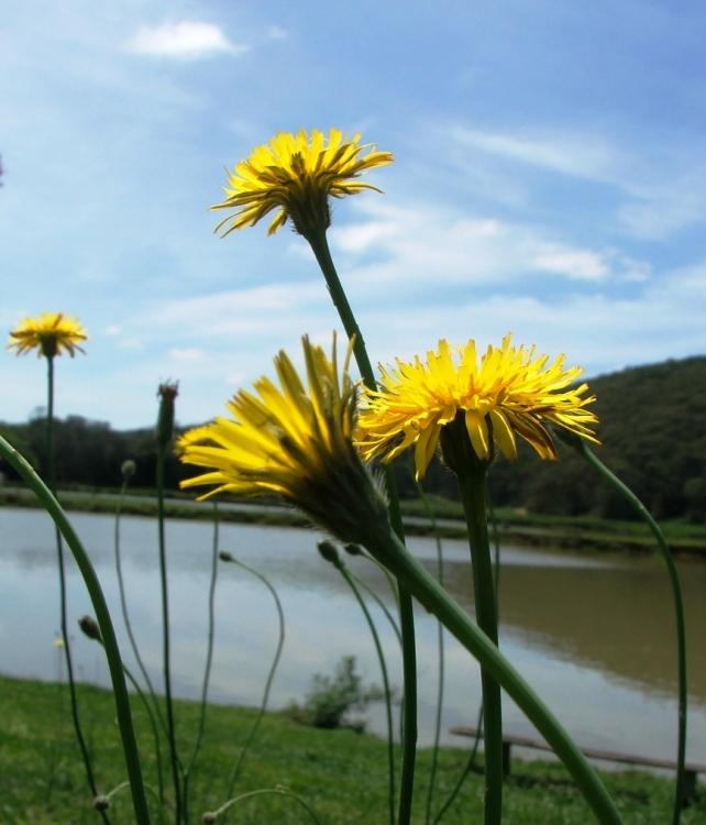 Paisagem Natural/Flores no Campo