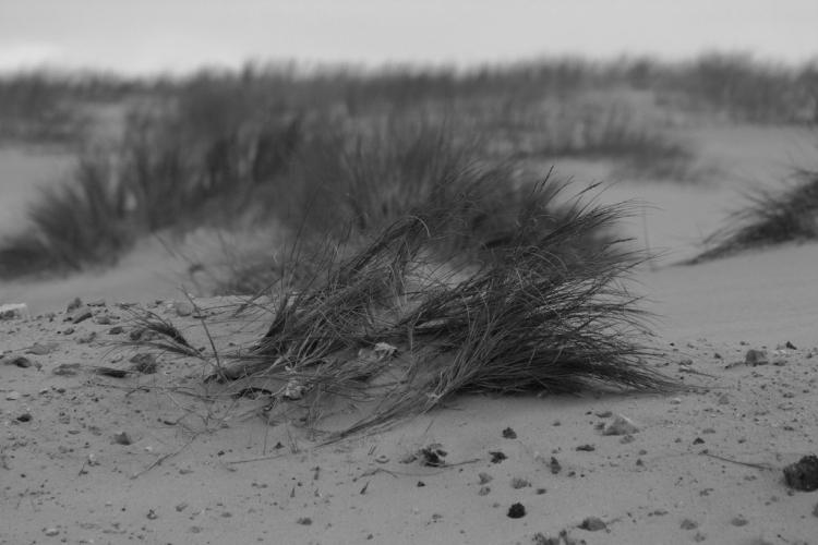 Paisagem Natural/dunas