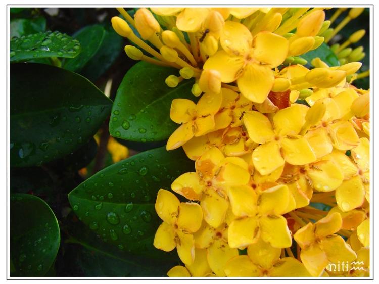 Macro/Para não dizer que não falei das flores