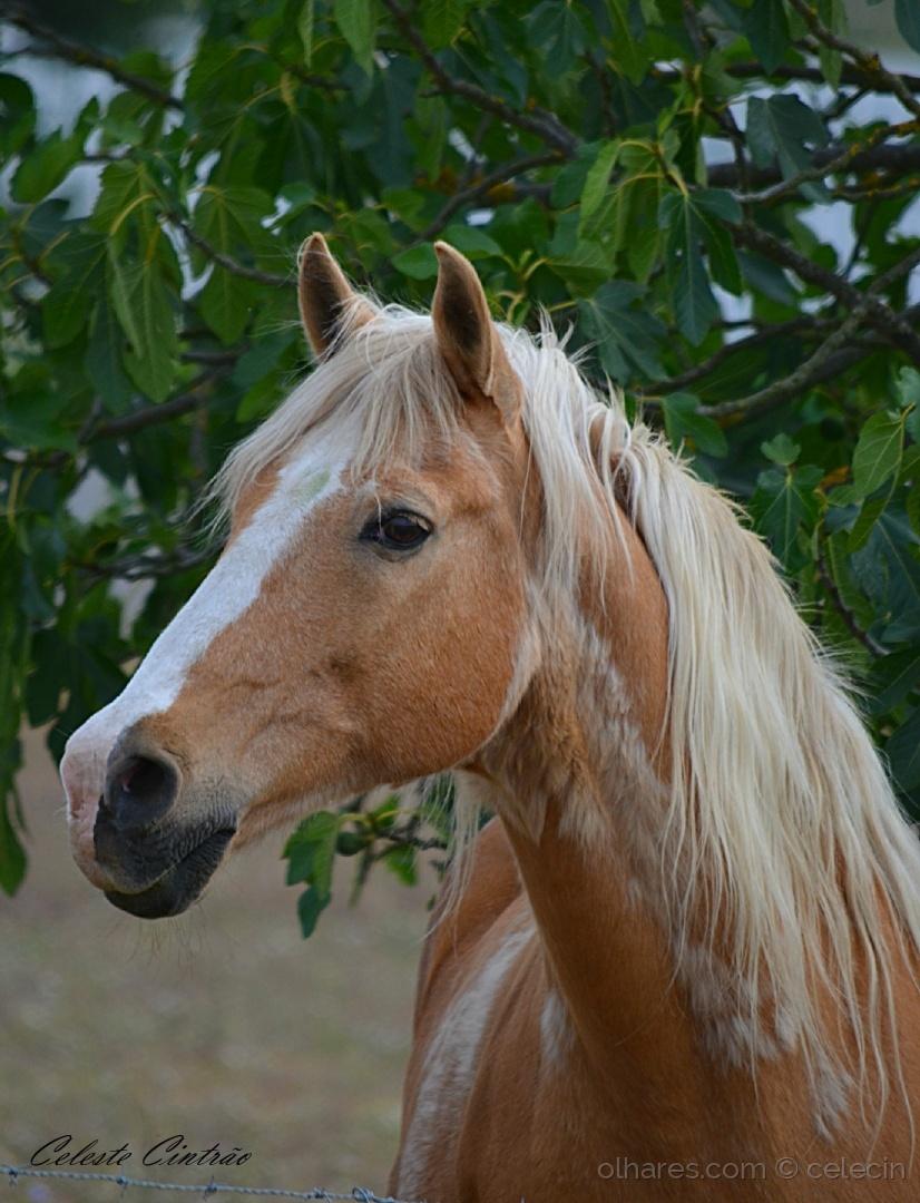 Animais/Cavalo à solta .......