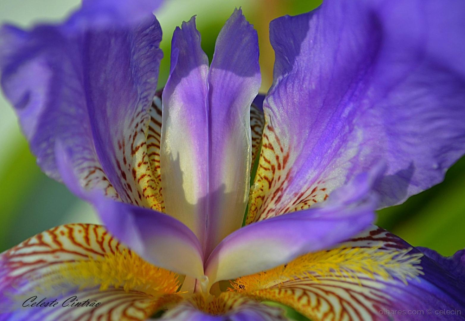 Macro/Maio o mês das flores.