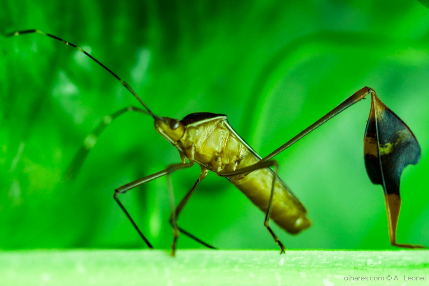 Macro/O inseto