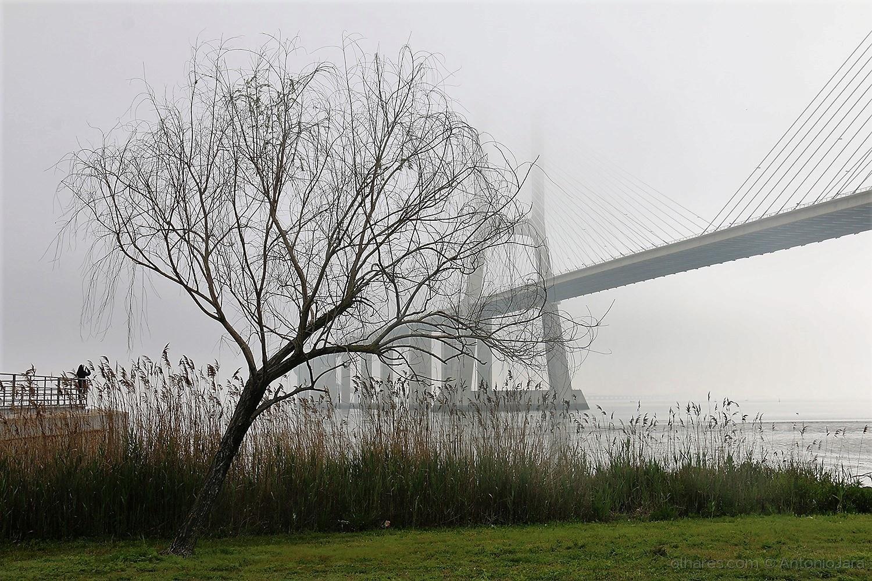 Gentes e Locais/Fotografando a ponte com nevoeiro (Lisboa)