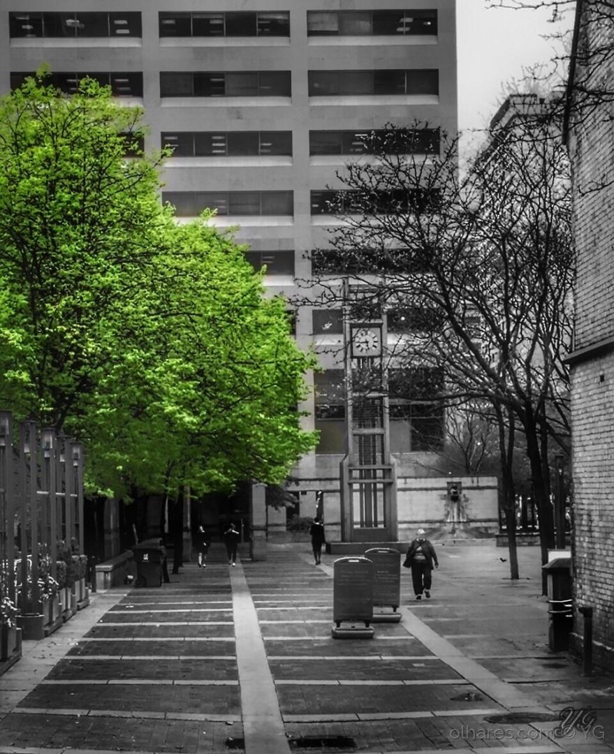 Paisagem Urbana/Toronto street ( andando por aí)