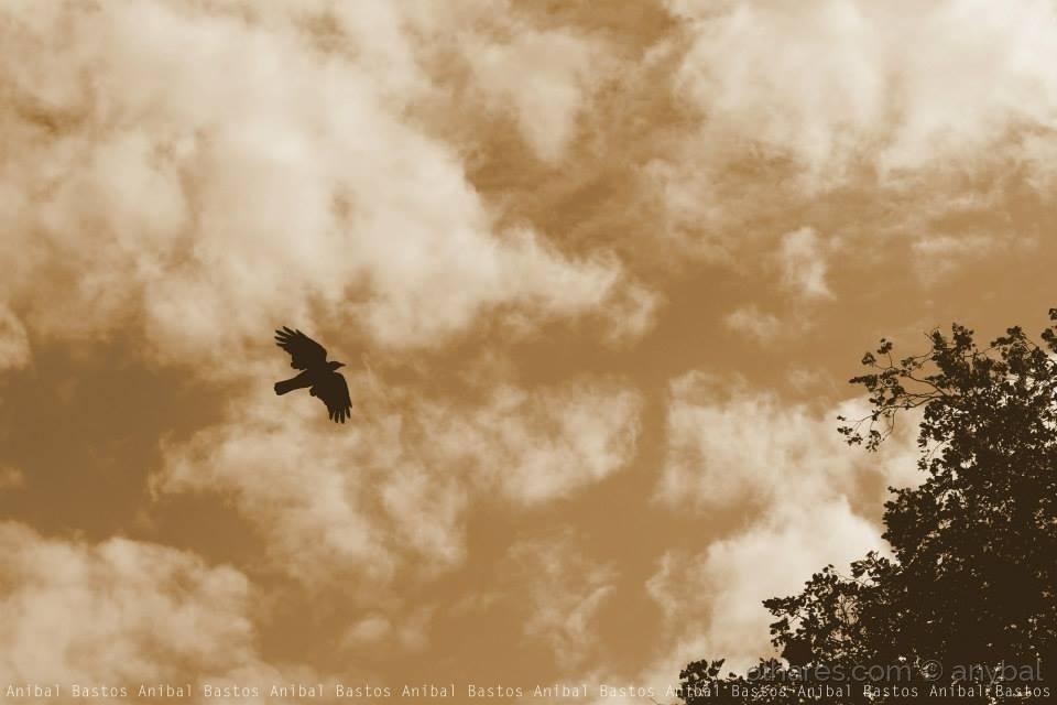 Outros/Voar
