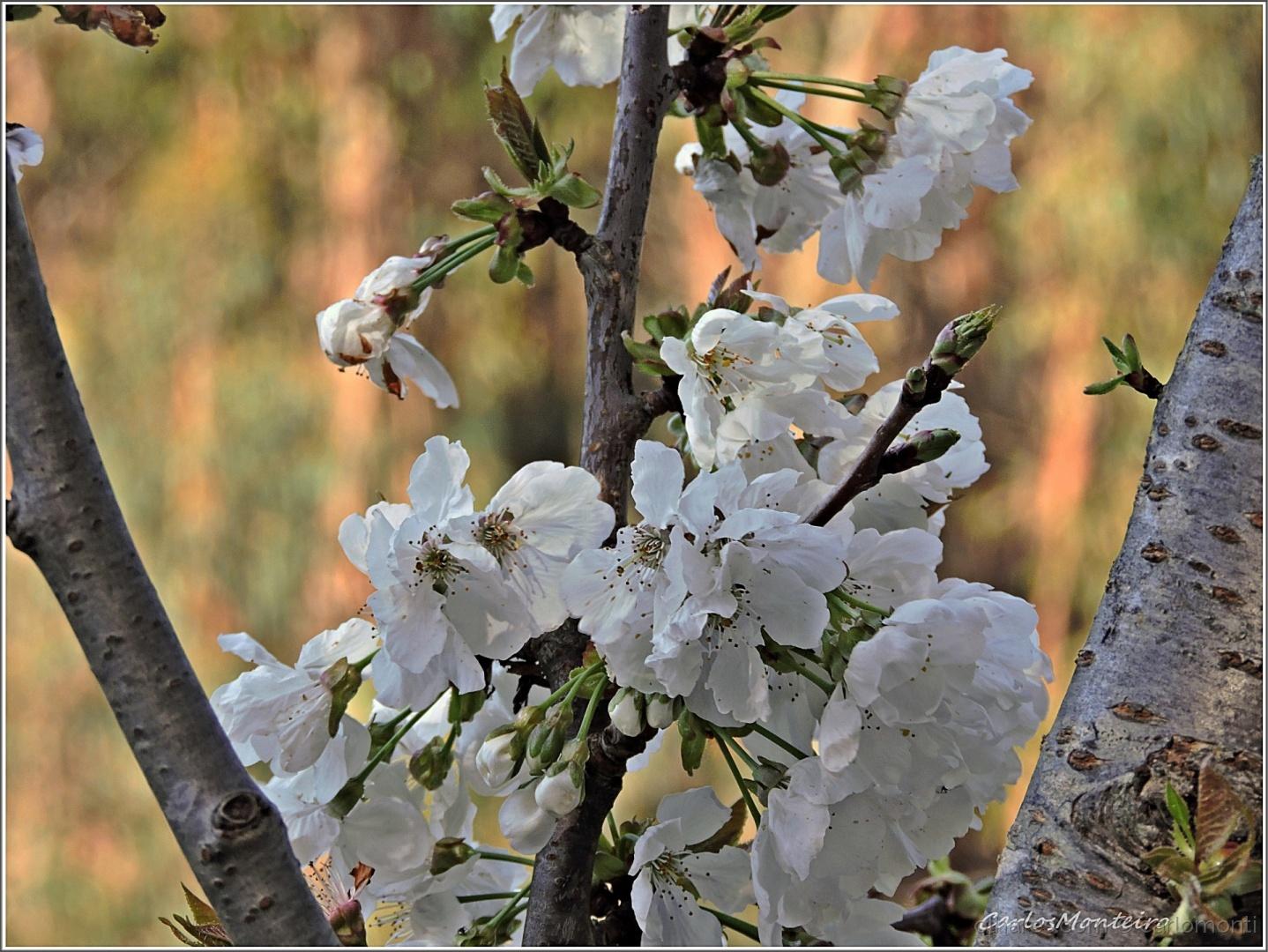 Macro/Primavera em força !