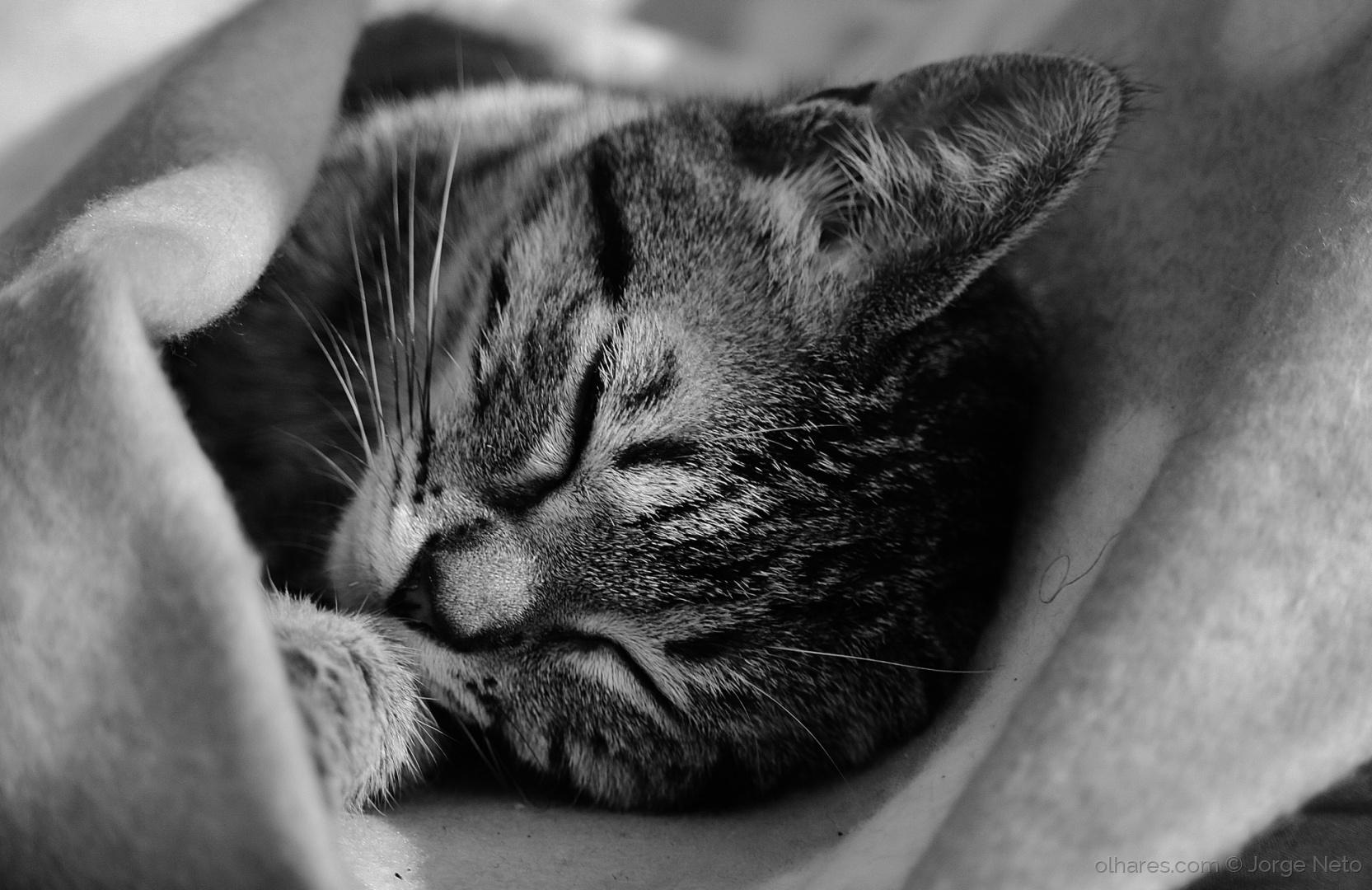 Animais/Dorminhoca!