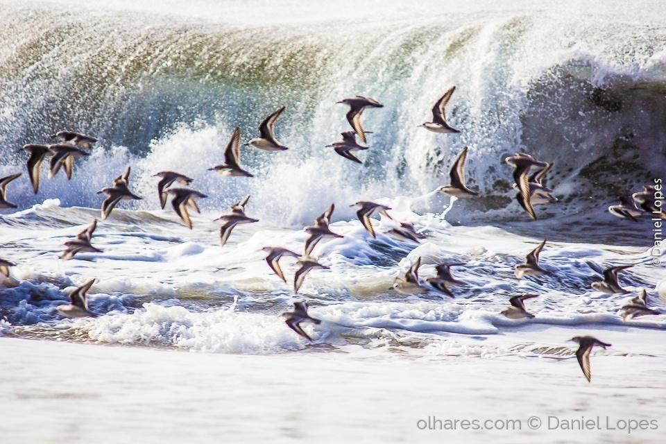 Animais/Na arrebentação da onda