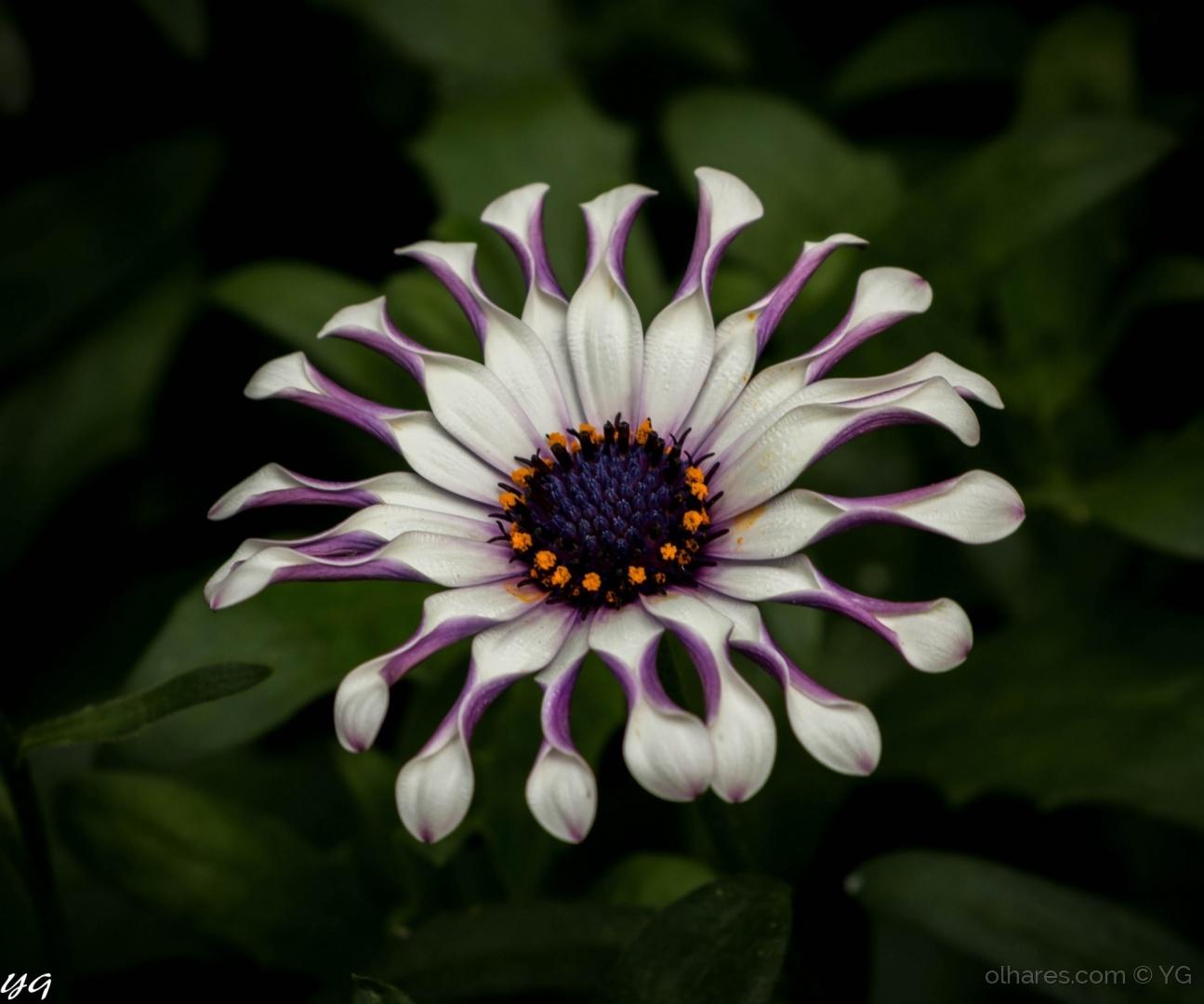 Paisagem Natural/flor de toronto