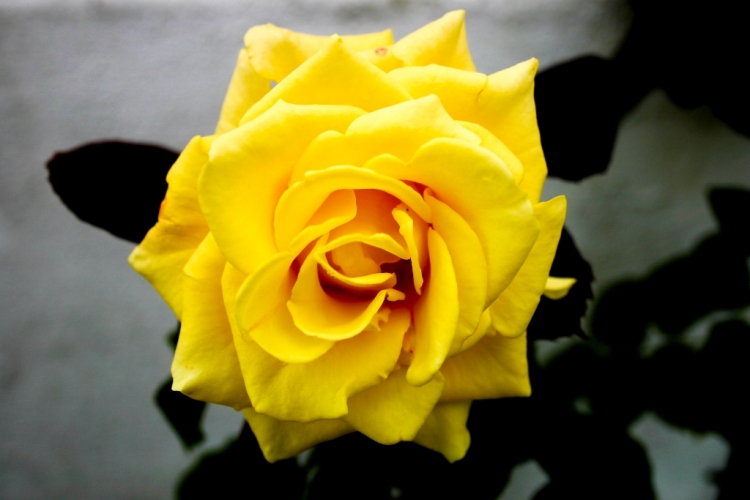 Outros/Yellow