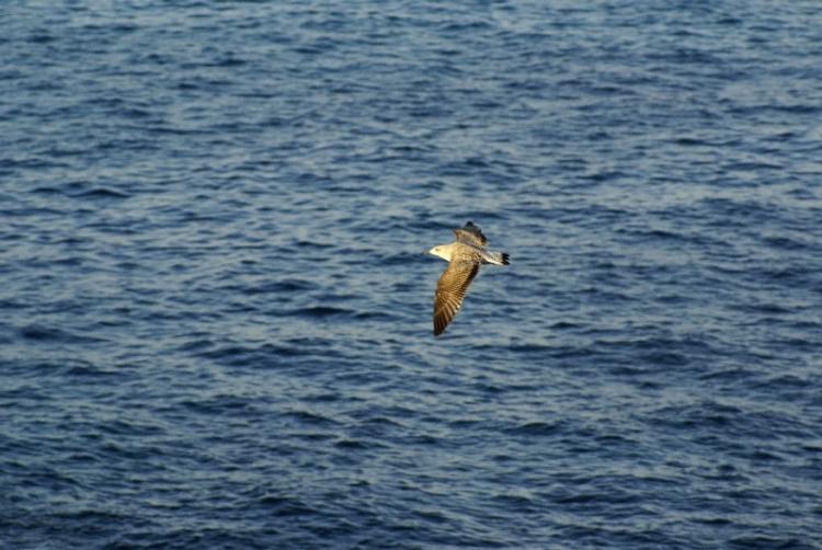 Outros/Voando sobre o Atlântico