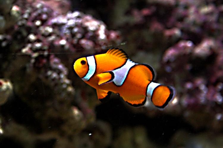 Animais/I found Nemo...