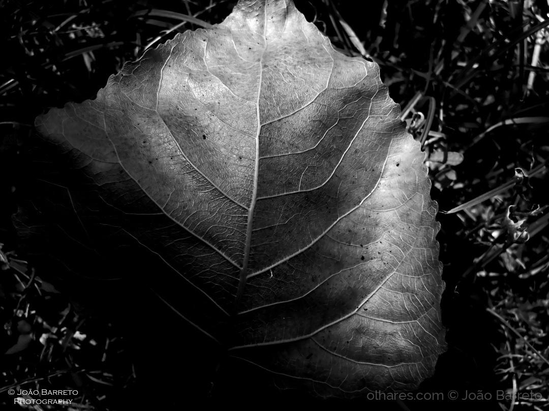 Abstrato/Detalhes de Outono