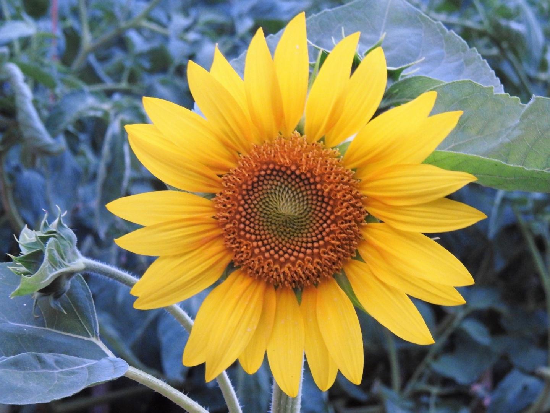 Paisagem Natural/Flor de verão...