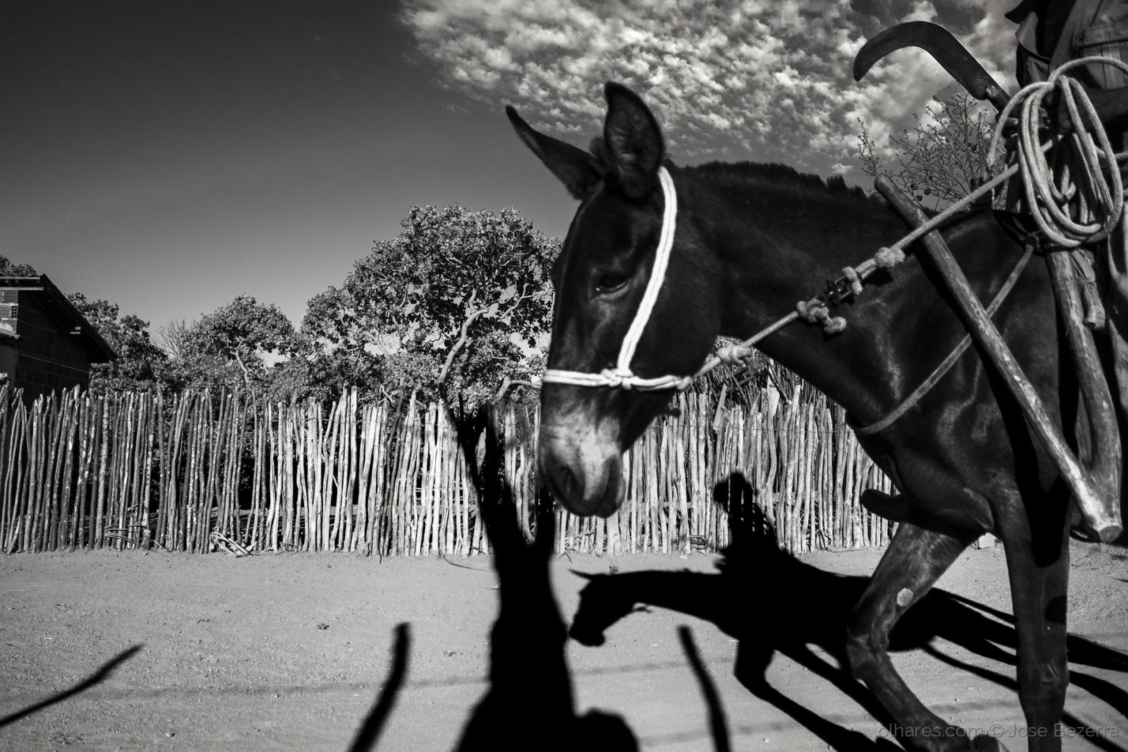 Fotojornalismo/A mula é nossa irmã...