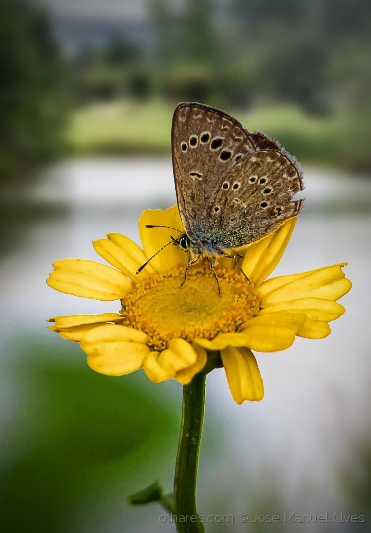 Macro/Borboleta em flor amarela