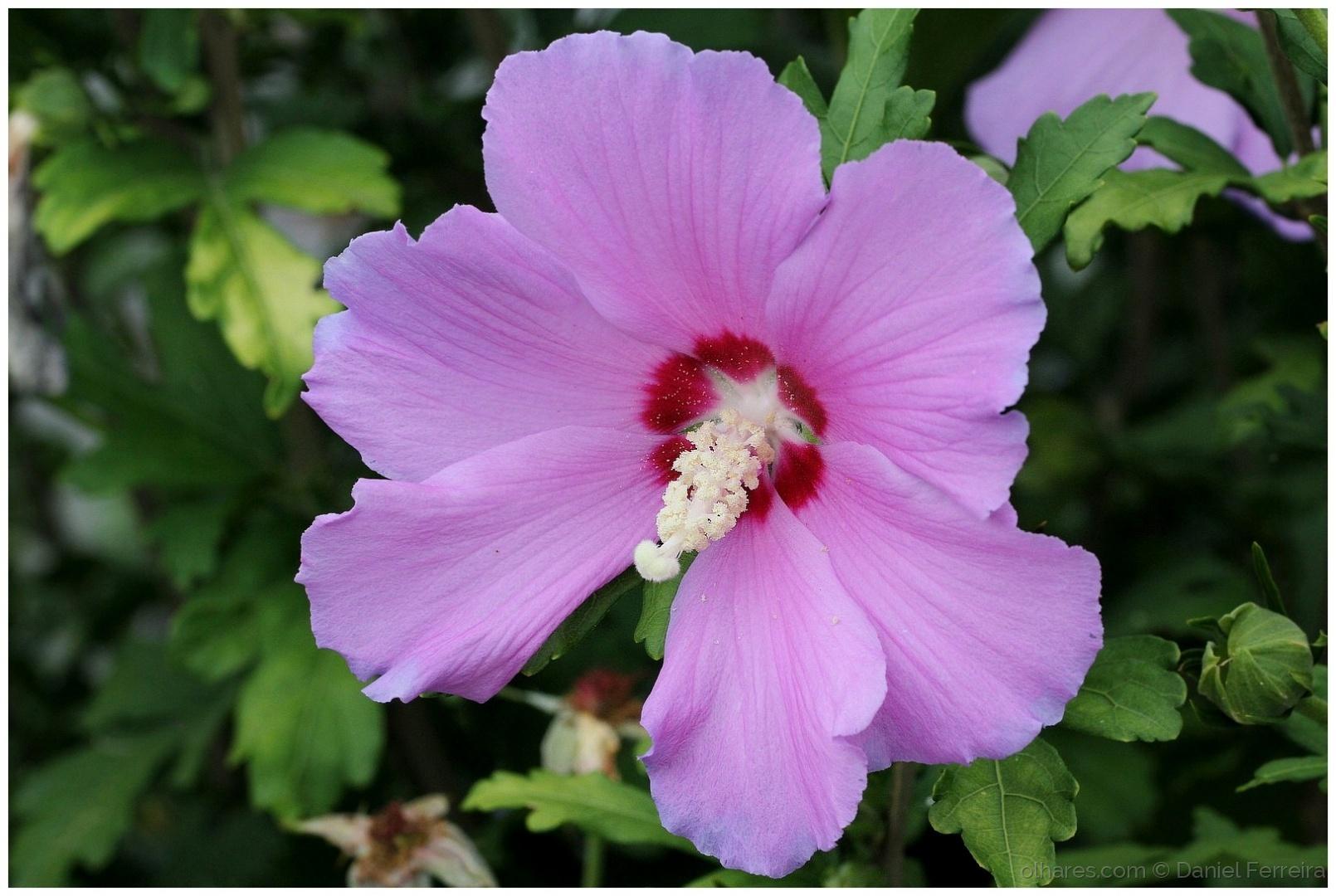 Macro/Uma flor do meu jardim