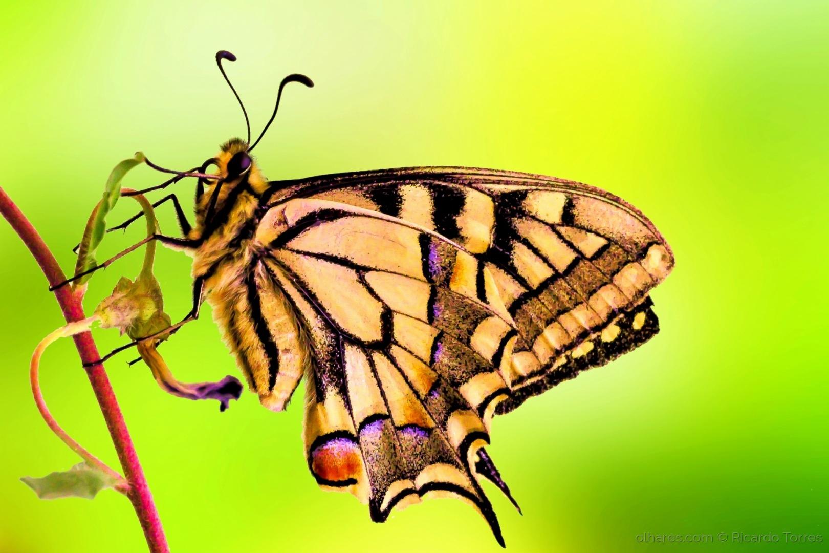 Macro/Butterfly
