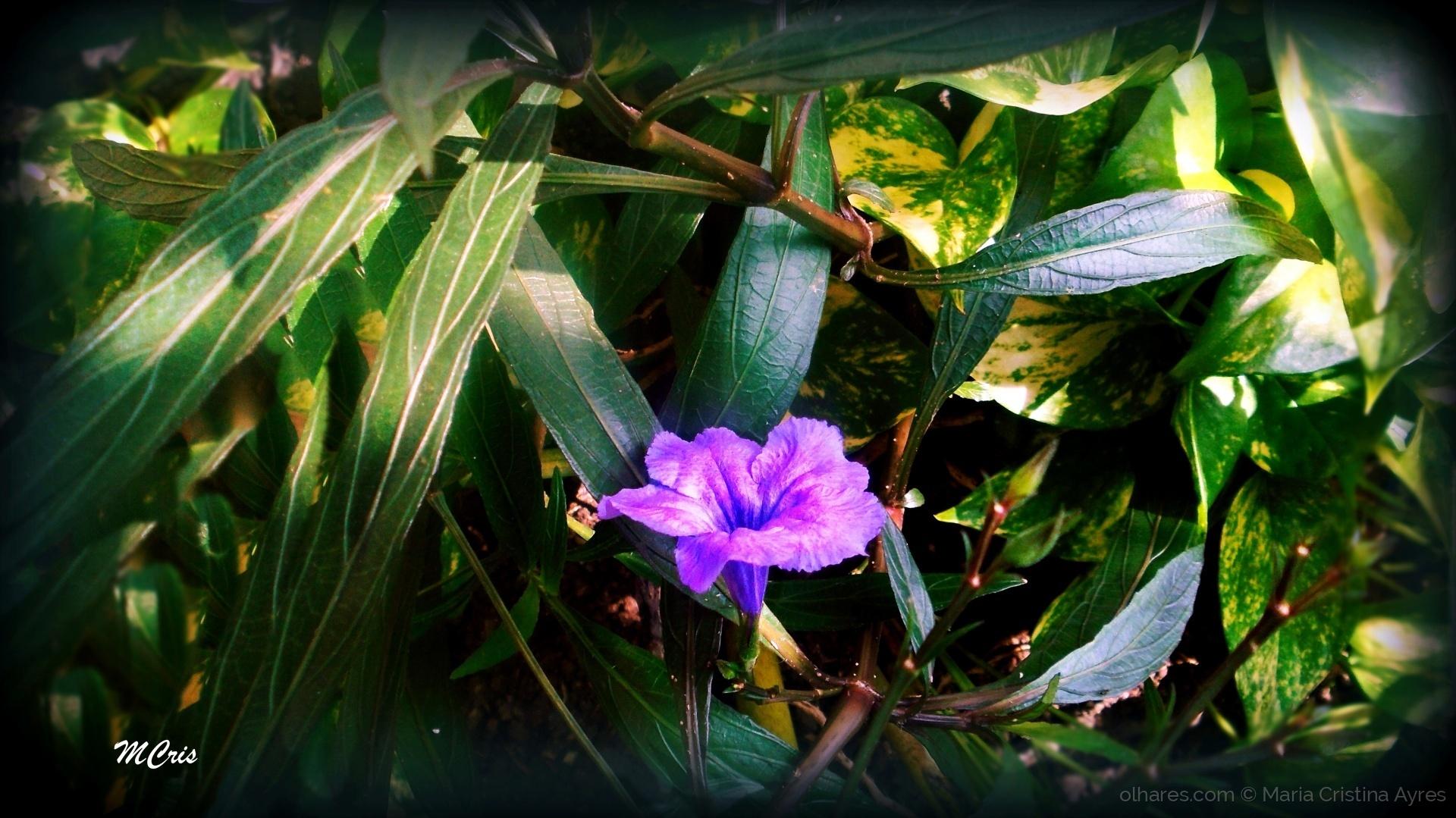 Macro/A vida fica mais leve, quando escolhemos florir...