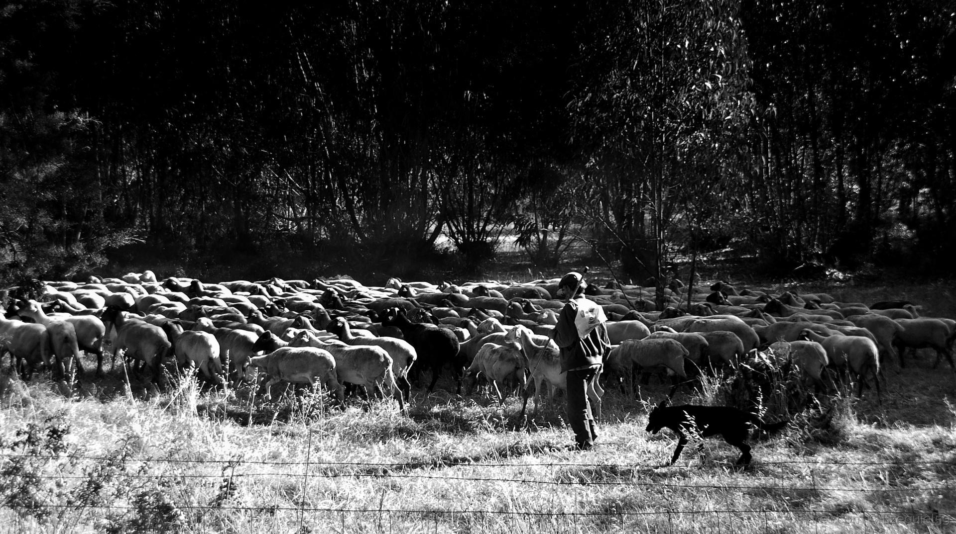 Paisagem Natural/Ruralidades (Ler descrição)