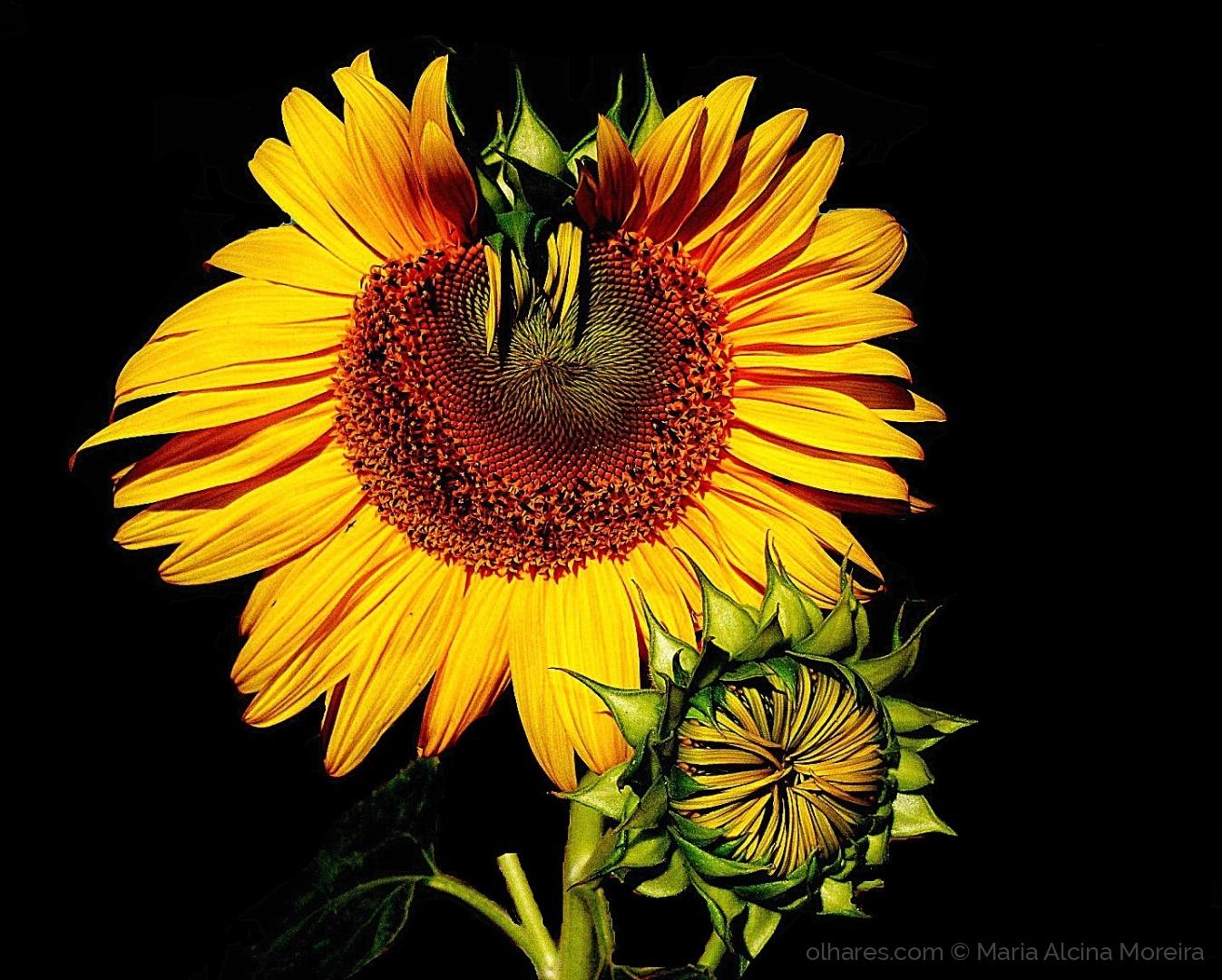 Macro/La fleur