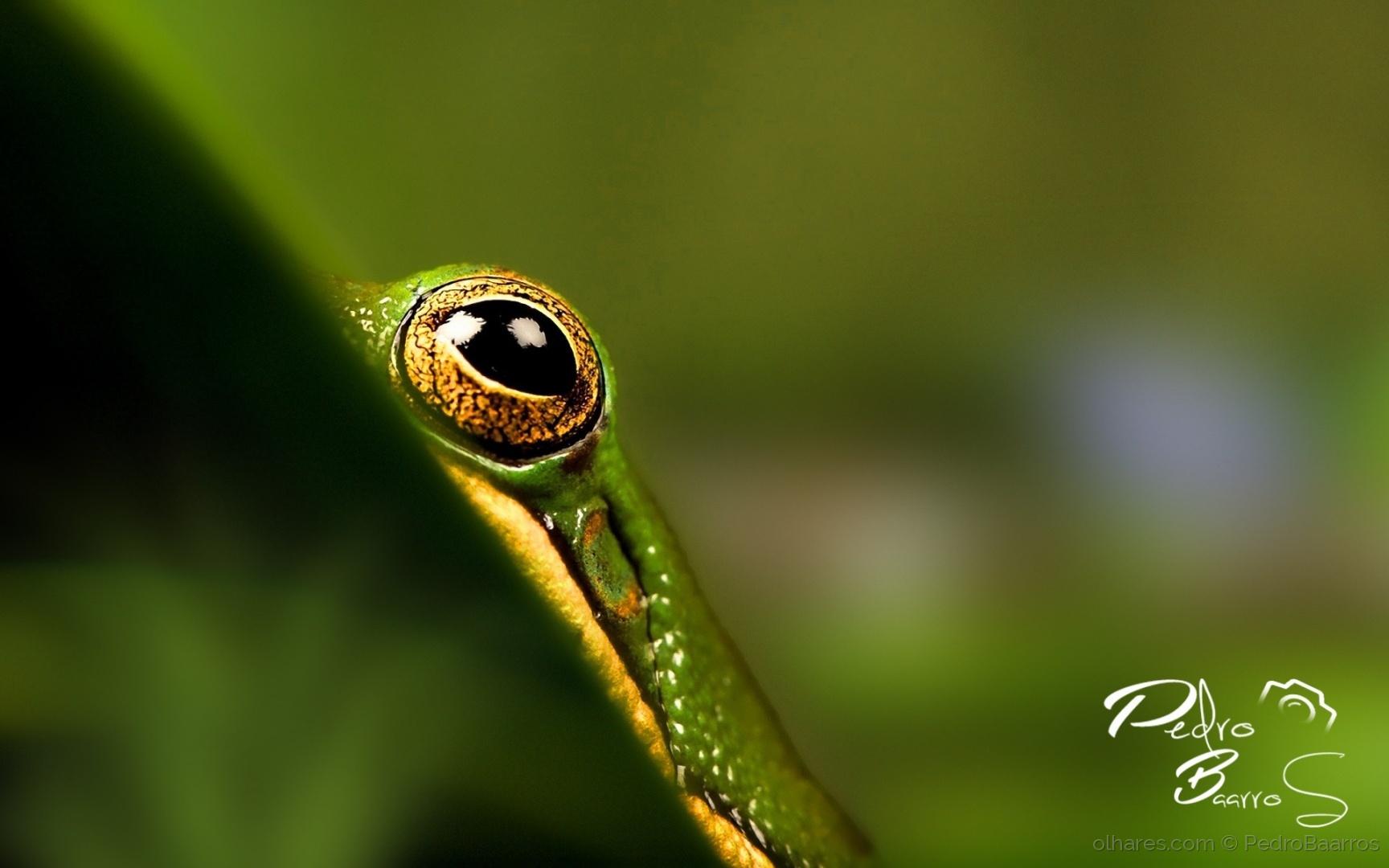 Macro/Frog eye