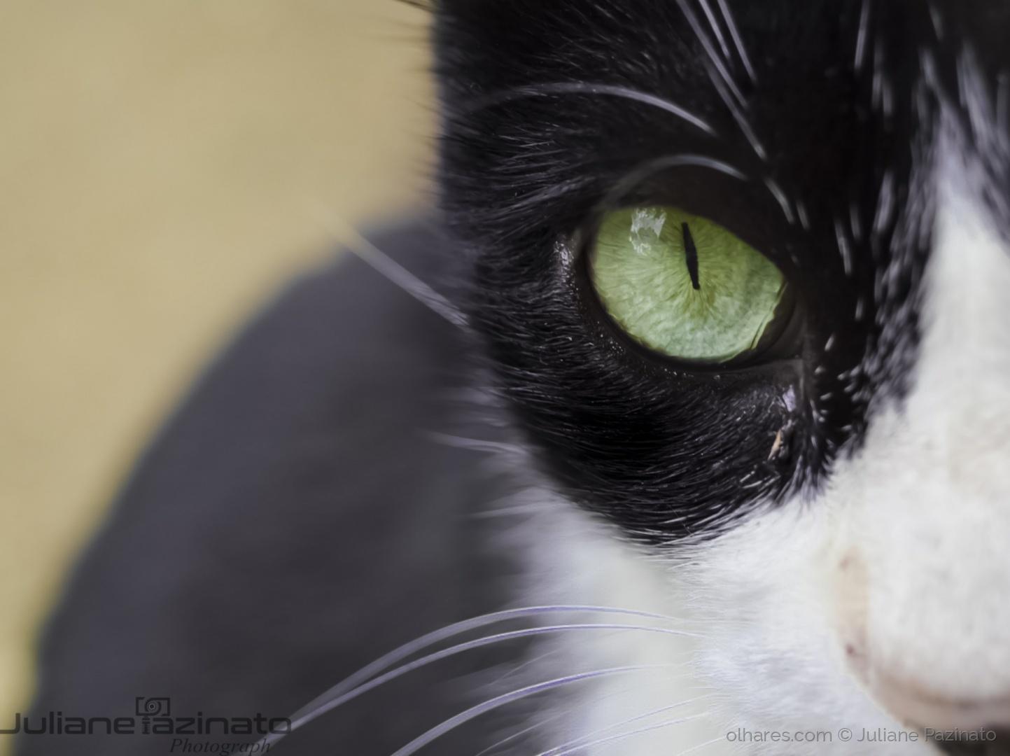 Animais/Glass Eyes