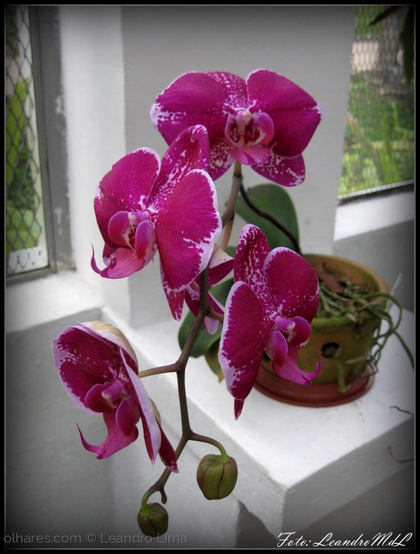 Macro/Orquídeas do Jardim Botânico 01
