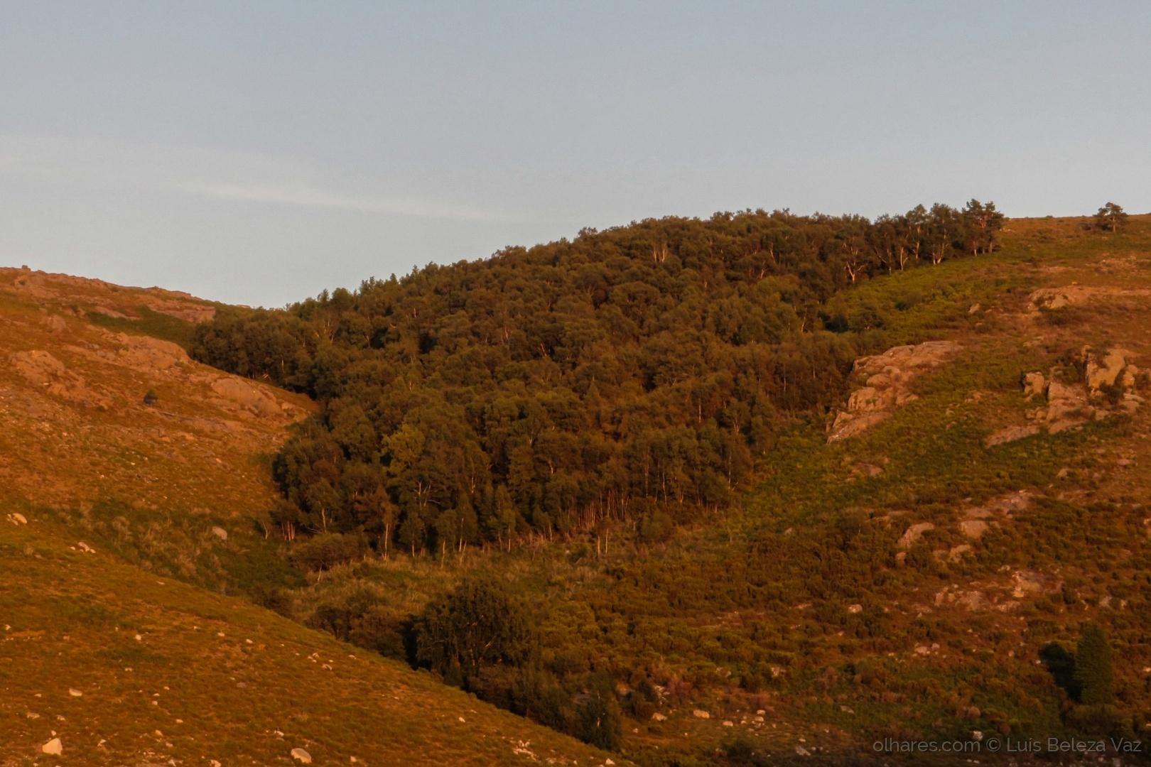 Paisagem Natural/Bosques de carvalhos e vidoeiros