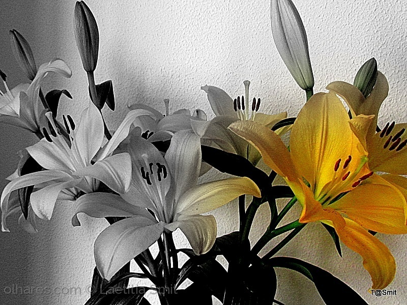 Macro/yellow lilly - Black & white