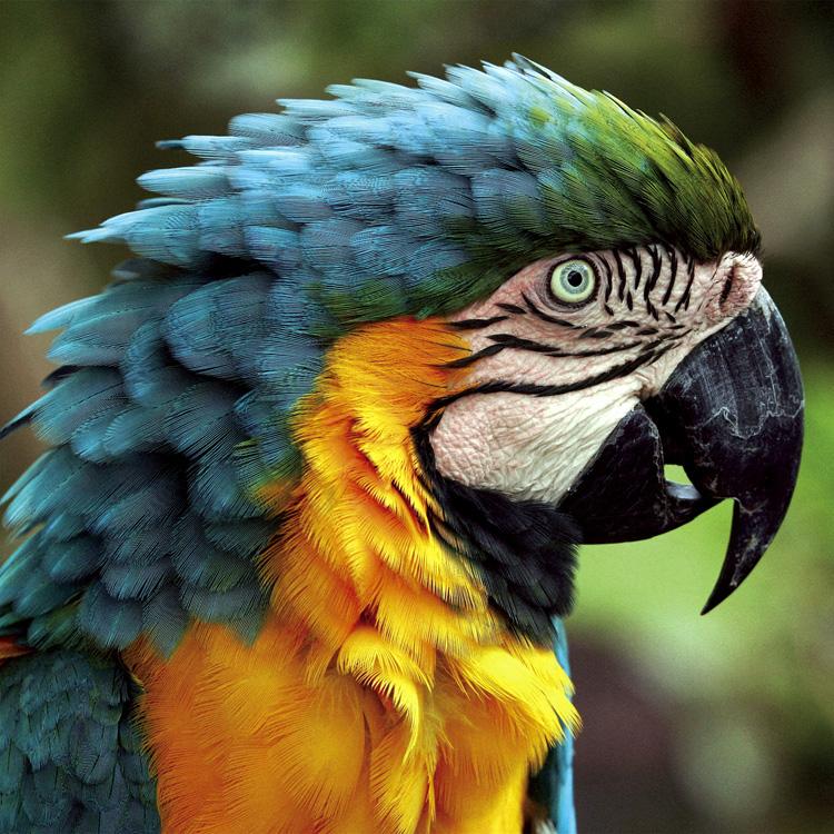 Animais/A cor do Brasil
