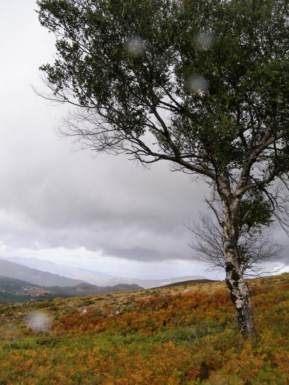 Paisagem Natural/Chuva Estival