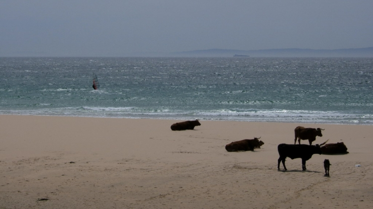 Paisagem Natural/Cow in the beach