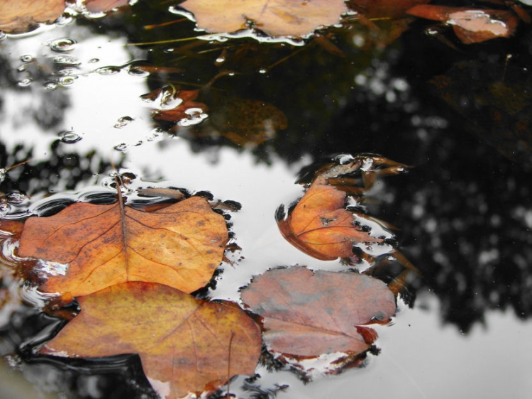 Outros/Sinais de Outono