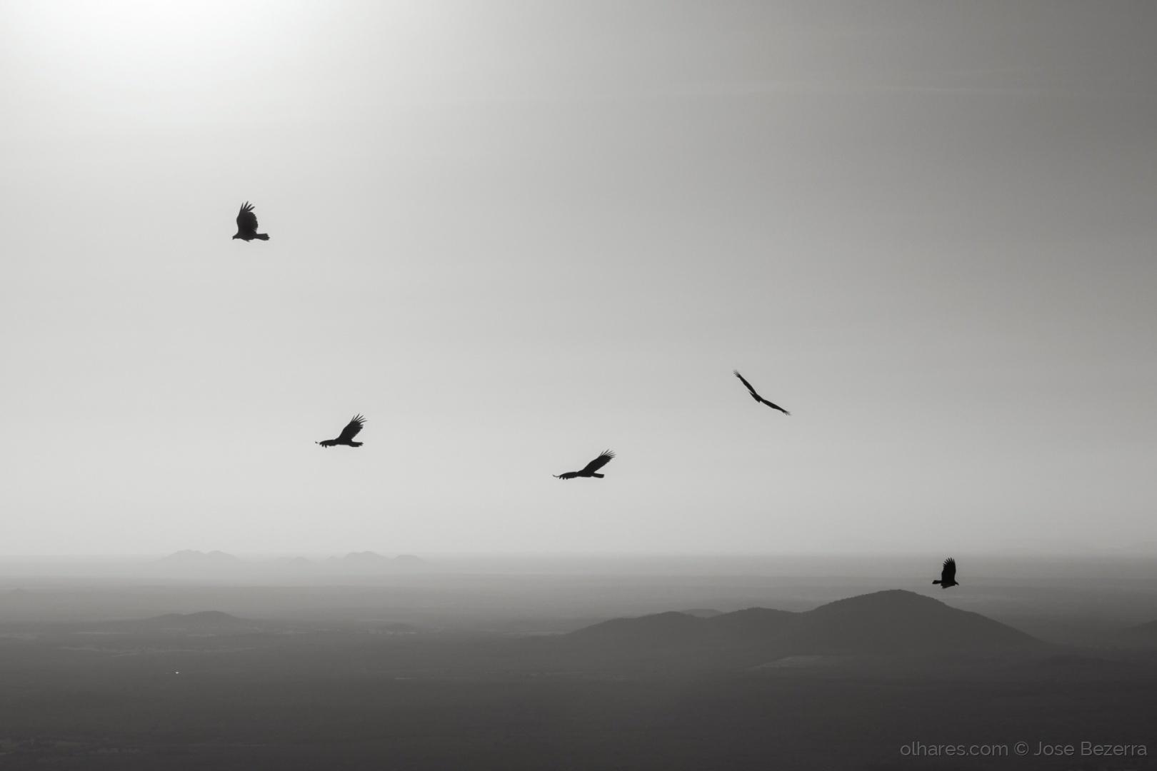 Paisagem Natural/Ah, os pássaros...