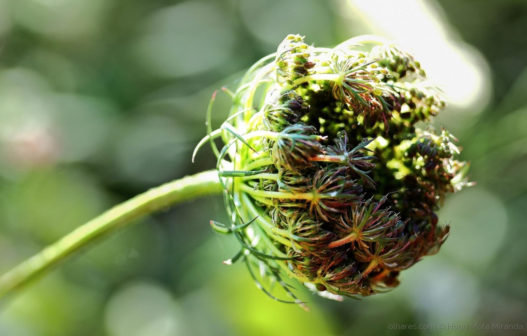 Macro/FLOWER!!!