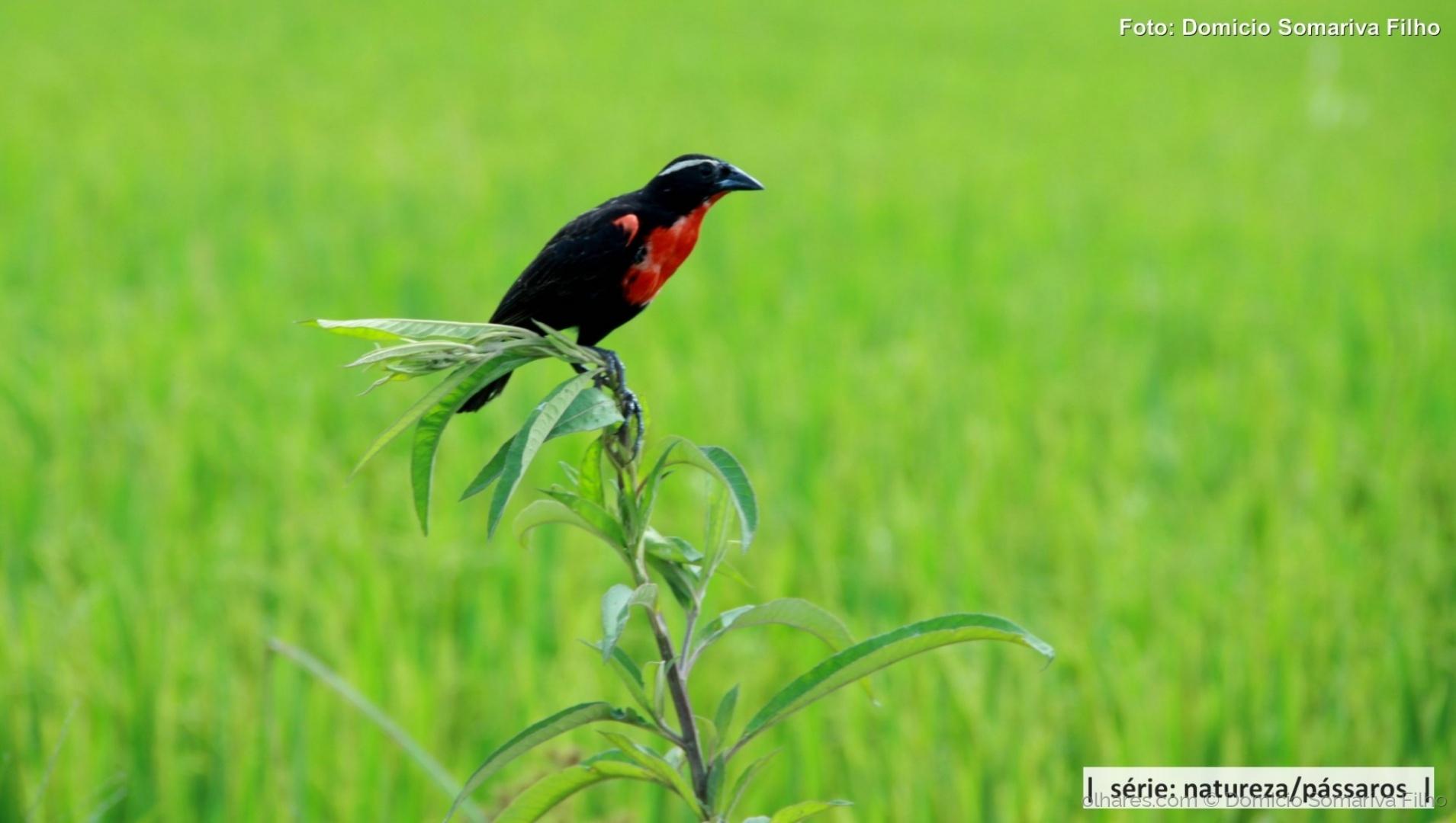 Outros/Pássaro (Chupim)