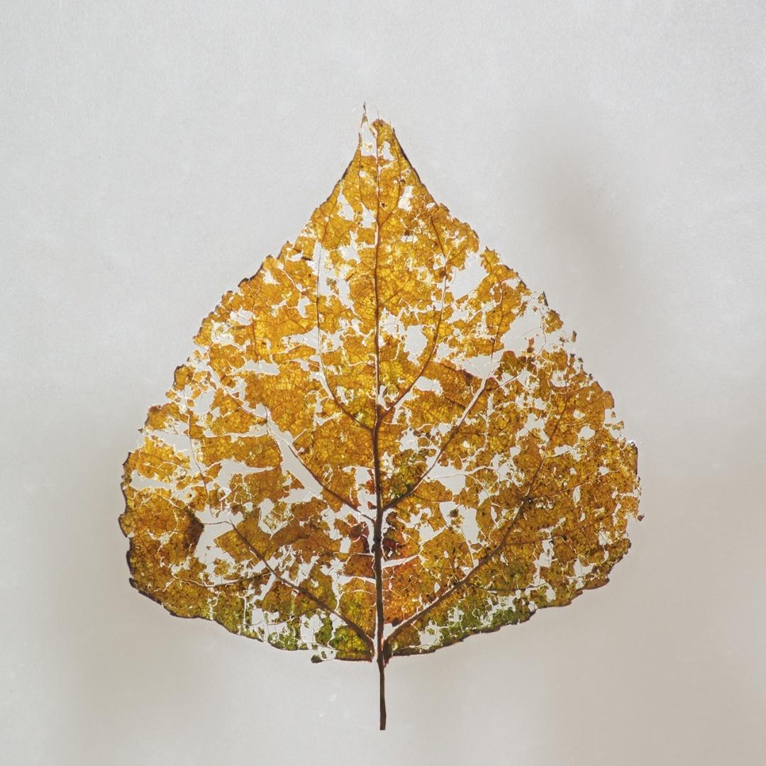 Macro/O Outono está a chegar